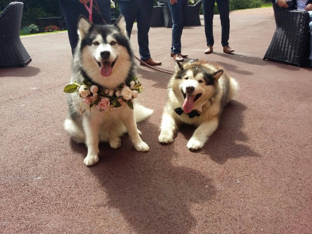 These Dogs are Best Man and Maid of Honour