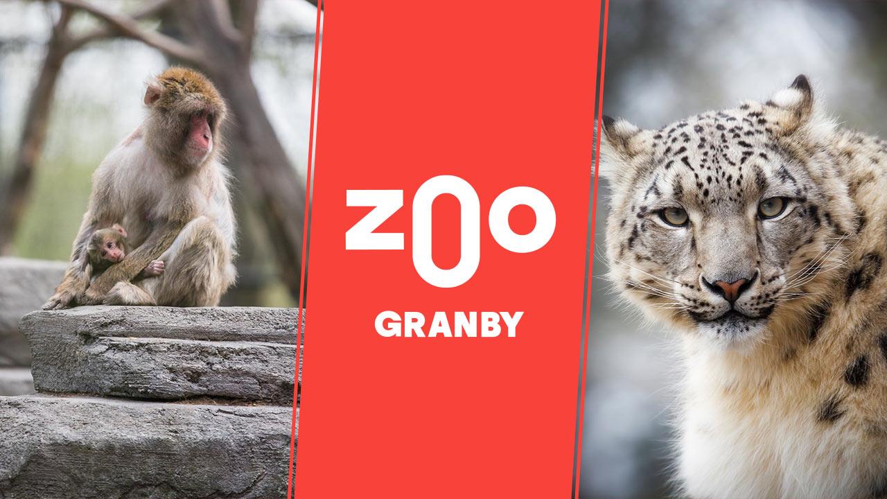 Une sortie palpitante en famille au Zoo de Granby